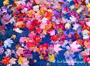 Leaves on Sidewalk jpeg