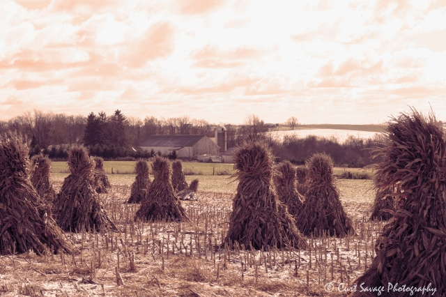 sepia-corn-stacks-jpeg-with-watermark